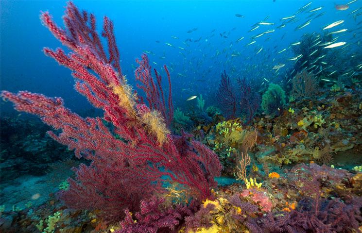 Le coralligène au parc national de Port-Cros